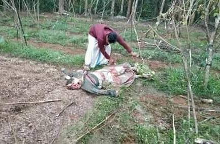 চট্টগ্রামের বোয়ালখালীতে বন্য হাতির আক্রমণে ৩ জন নিহত হয়েছে।
