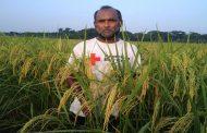 ঝিনাইদহে দু'দিনের বর্ষণে বিভিন্ন ফসলের ব্যাপক ক্ষতি
